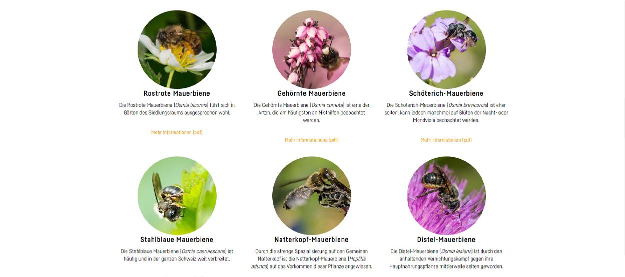 Wildbiene + Partner Blumen